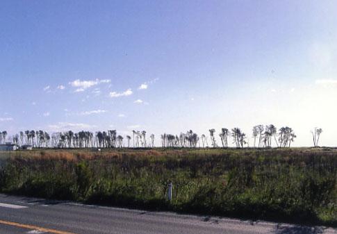 巨大な津波が襲った海岸。何軒もの家が廃墟になっていました
