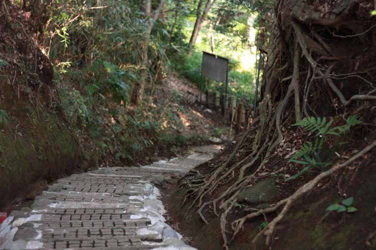 深大寺周辺は、緑がいっぱい!こんな立派な木の根っこが間近で見られるし、マイナスイオンをたっぷりの空気も味わえます。この階段を降りていくとメインの深大寺に行くことができますよ