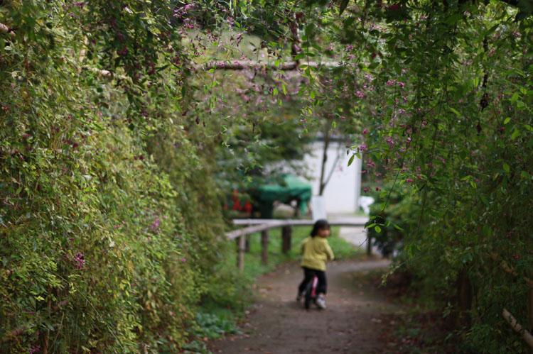 私の大好きなグリーントンネル! 興奮して入り口からと出口からも撮影しちゃったわ(笑)。少女よ、不審な目で私を見ないでおくれ…。私もここが好きなのよぅ!