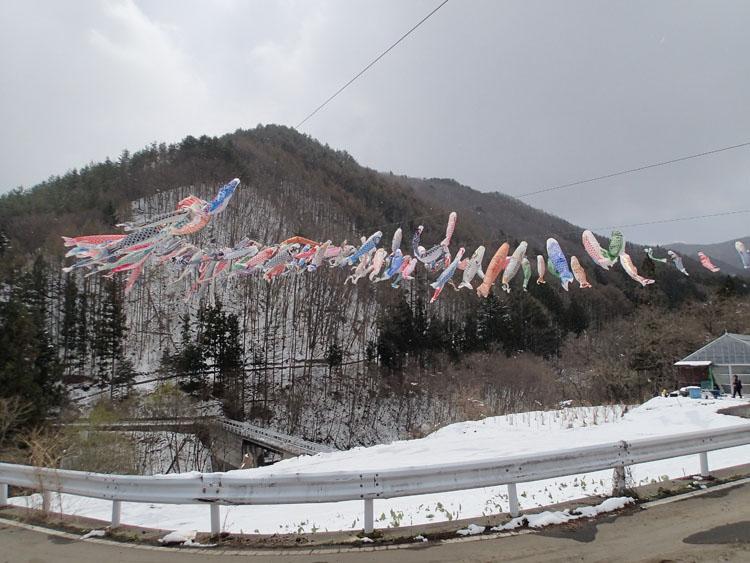 花咲温泉の近くで何匹ものこいのぼりが空を舞っていた。こいのぼりは春の風物詩だが、周囲には雪が残っていた