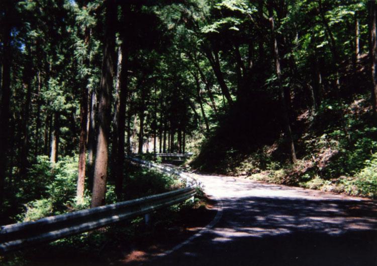 こんなカンジの道を、たかみな号とともにチンタラチンタラ登っていきます。すると……!?