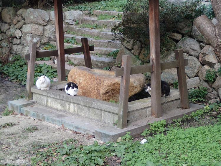 温泉街にはつきものの野良猫たち。「金の湯」に入れなかった私の心を癒してくれるのは猫たちだけだ
