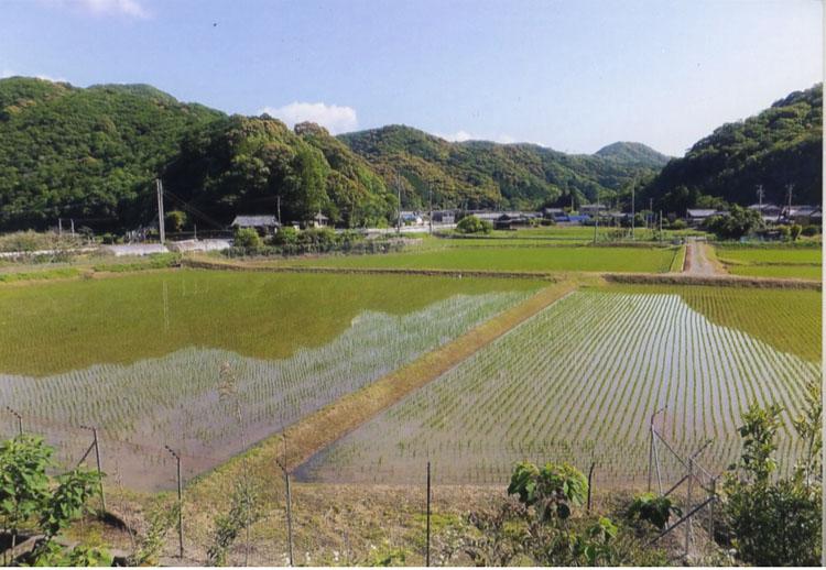 旅をしたのは5月。田植えがすんだばかりの田んぼが広がる風景は、日本らしく手、本当に美しいです