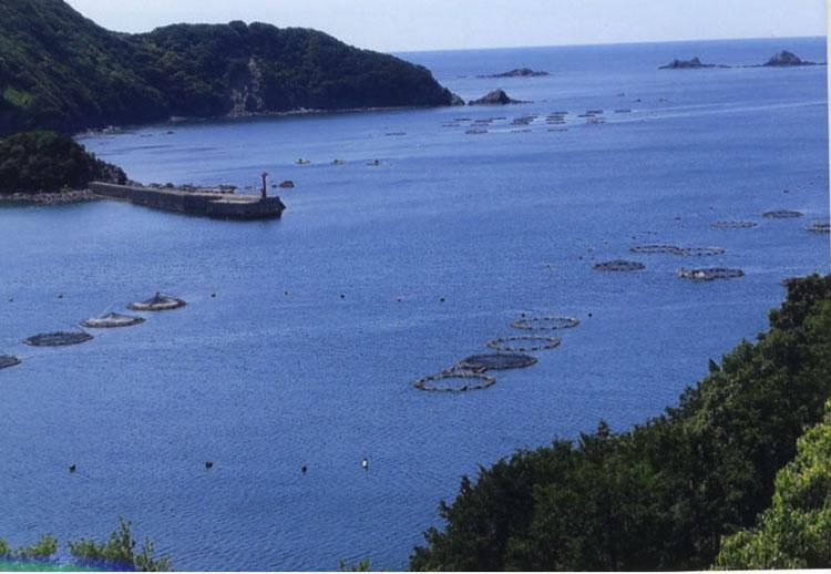 浮かんでいるネット状の物は、養殖用のいけすでしょうか。プランクトンも豊富そうだし、おいしい成魚になるんだろうな
