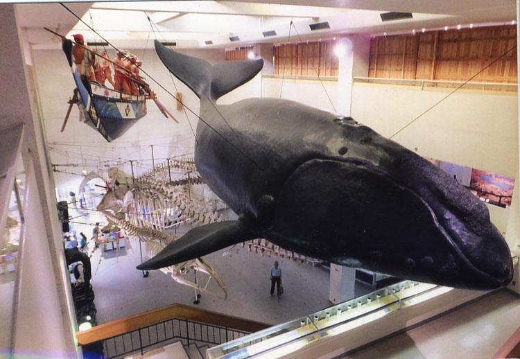 クジラは日本人の生活を支えてきたんだよねェ−。外国からどーのこーの言われる筋合いはないんだよ。本当はね