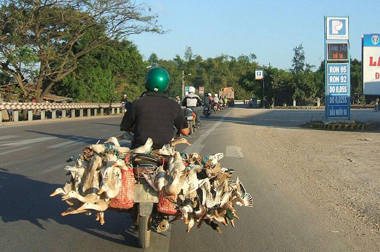 生きたアヒルもバイクで運ぶ!