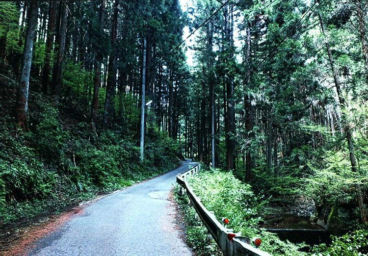 杉林の中の狭い道をどんどん進んでいくこの先はかなり急な登り坂となるぞ