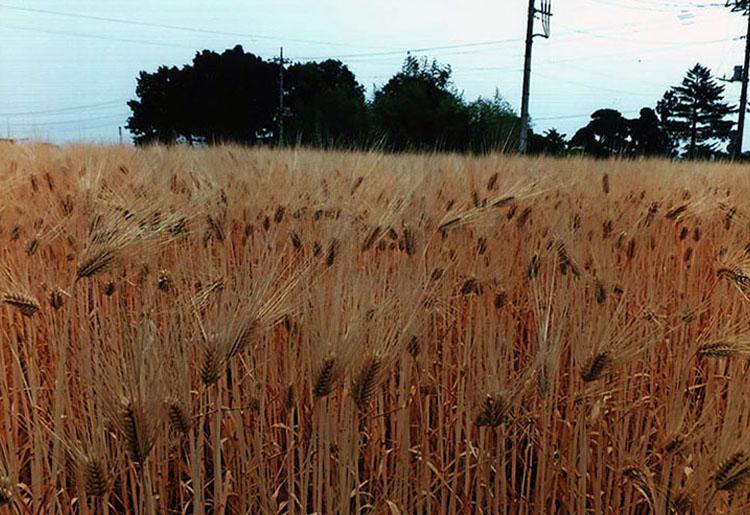 地元で採れた小麦だからこそおいしうどんがいただけるのヨ