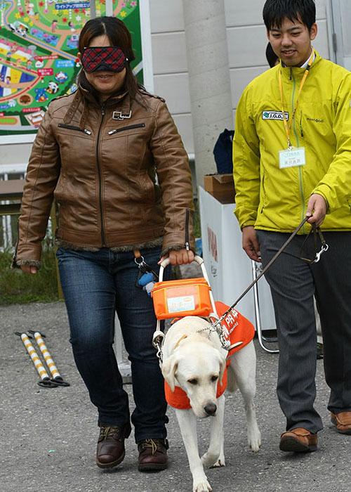 盲導犬募金