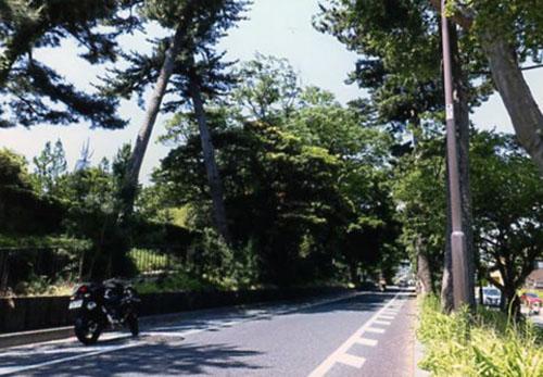 箱根駅伝の選手たちが駆け抜けていく東海道の松林。