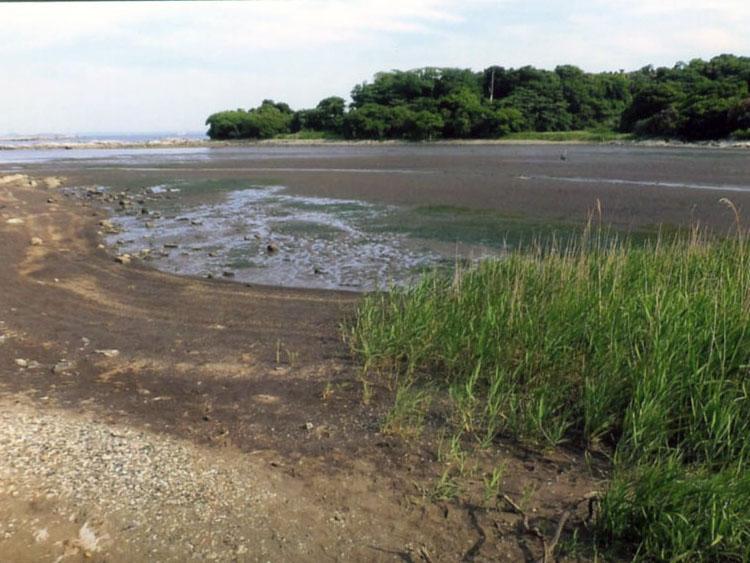 お江奈湾の干潟