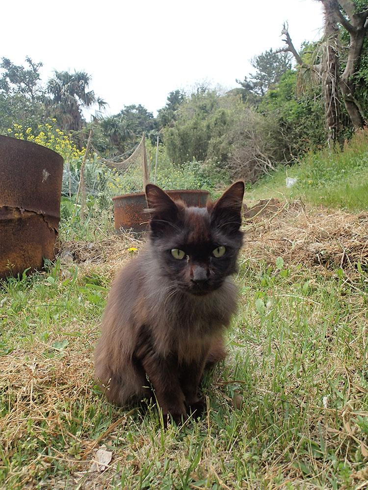 玉井カメラマンに視線を送っていた黒猫