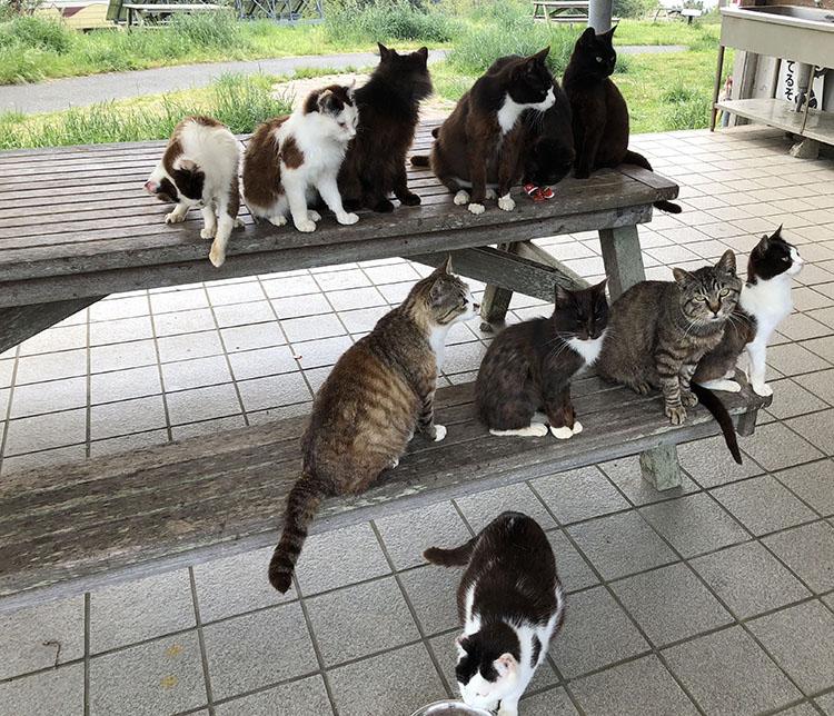 マンガアイランドに集結していた猫たち