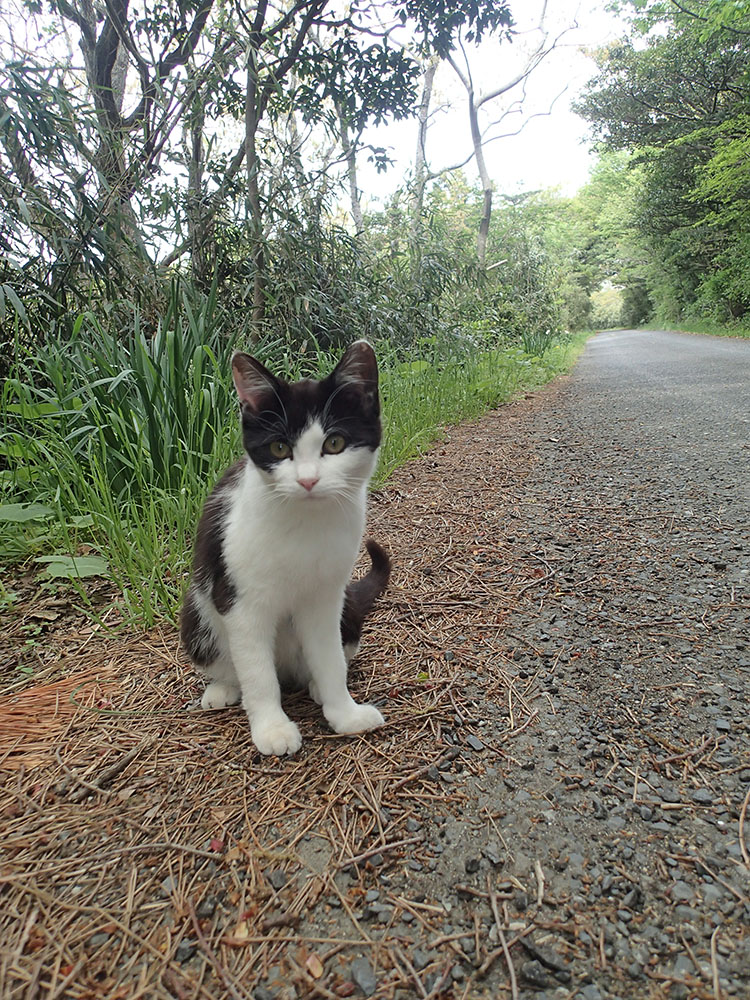 今回撮影した猫たちの中でも可愛かった子猫泉
