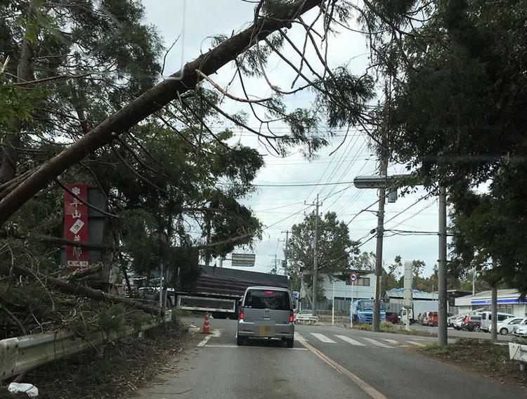 いたるところで倒木。ようやく車が通れる状況。